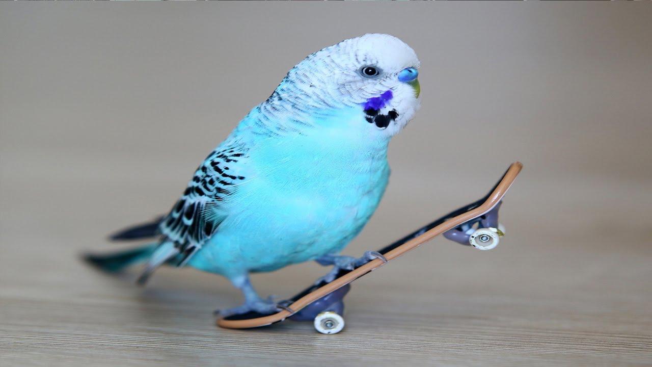 En hızlı kuş kim