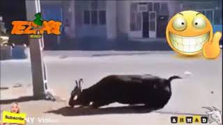Funny clip 2018 latest video   YouTube