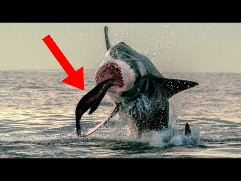 Most POWERFUL Sharks In The World!