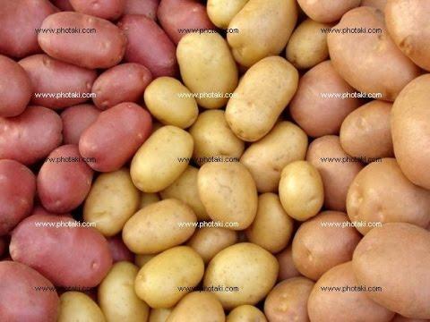 Большой выбор сортов семенного картофеля, сертифицированный семенной картофель по низкой цене в беларуси с доставкой. Оптовая продажа семян.