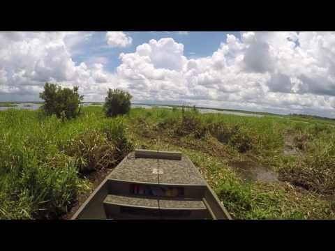 7 15 17 Swamp Shark Ride