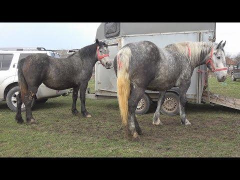 prejmer targ de animale from YouTube · Duration:  29 seconds