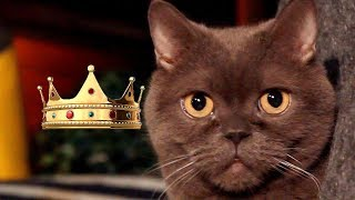 Самая  умная порода  кошек!Наш Барсик на Ютюб)