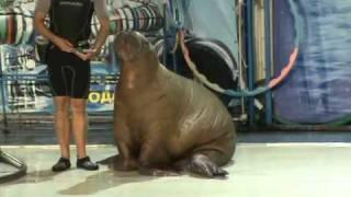 Акватория - Цирк морских животных