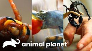 3-ataques-de-dragn-wild-frank-en-busca-del-dragn-animal-planet