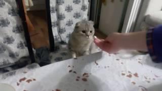 Кот не ест соль