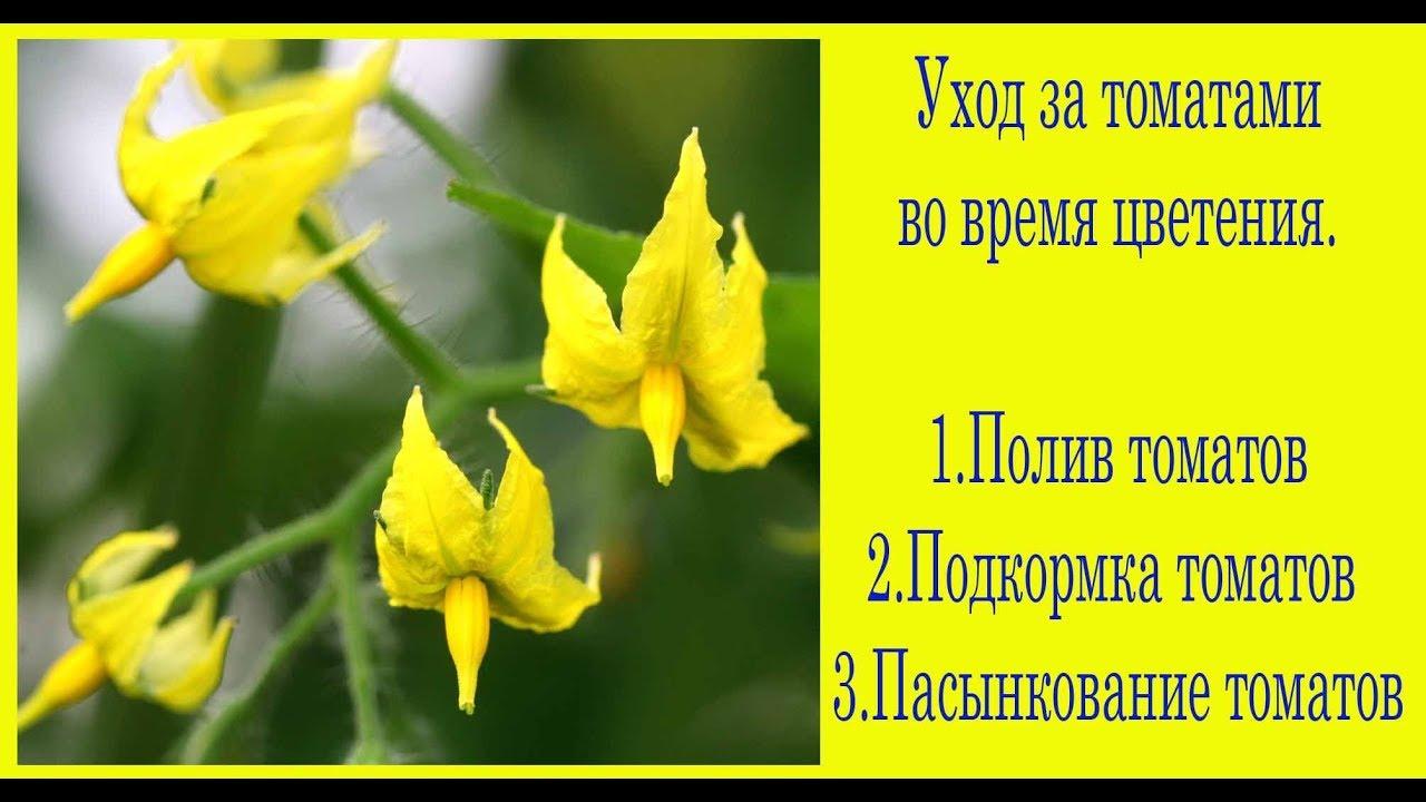 Уход за помидорами во время цветения. Сад и огород выпуск 234