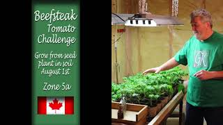Beefsteak Tomato Challenge