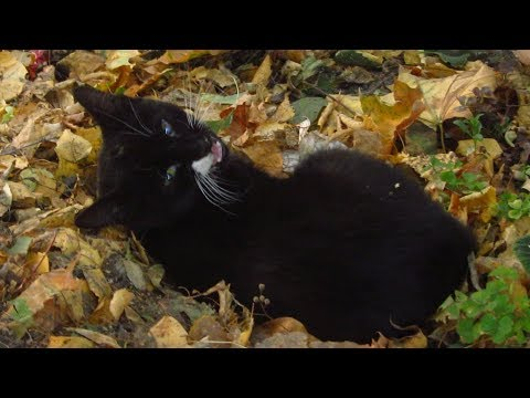 Kitten lying on dry leaves and doesn't want food