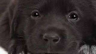 "chien qui chante ""petit papa noel"""