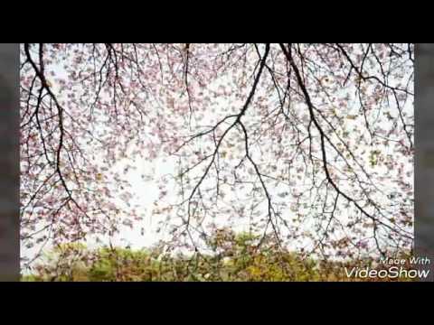 Картинки на тему : Весна