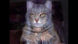Женщина-кошка.wmv