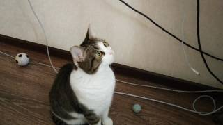 Кошка боится спиннер