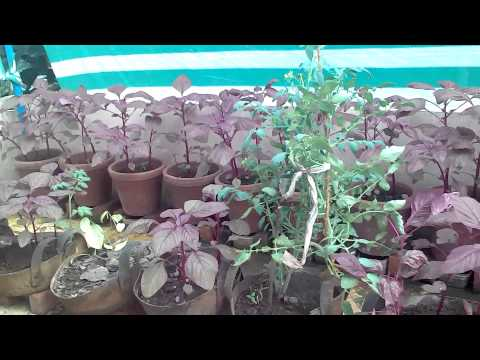 New methods of organic terrace farming on terrace