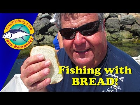 Fishing With Bread! | SPORT FISHING