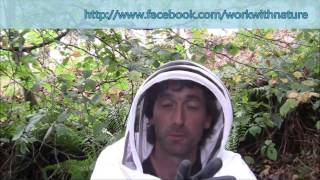 End of the year beekeeping check / What happens if you neglect bees / How to make bate hives