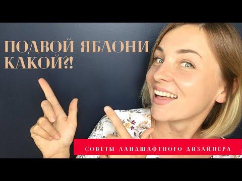 Подвои для яблонь +  КНИГА в ПОДАРОК!!! ссылка на книгу в описании под видео.