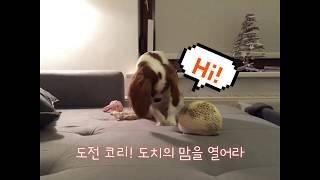 고슴도치와 놀고싶은 아기 강아지
