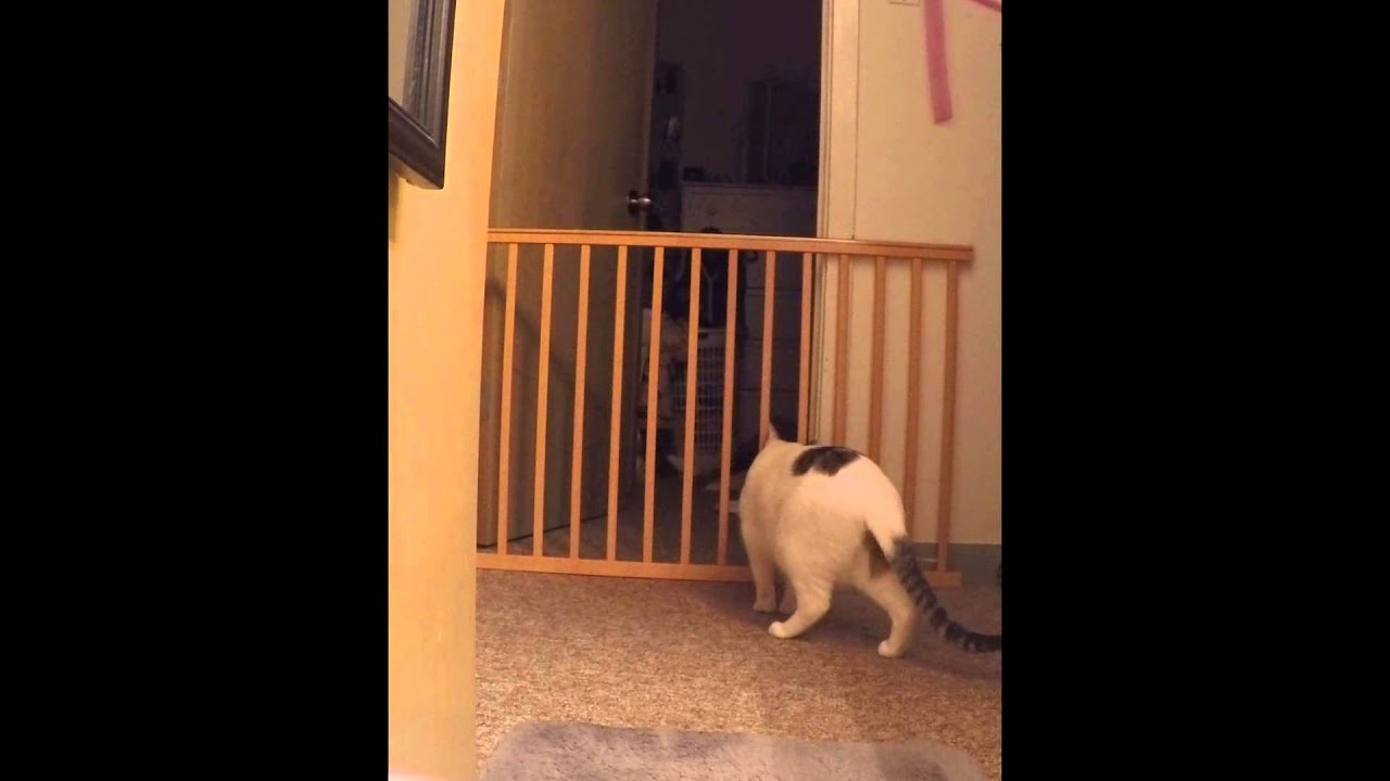 Funny Cat Jumping Over Baby Gate