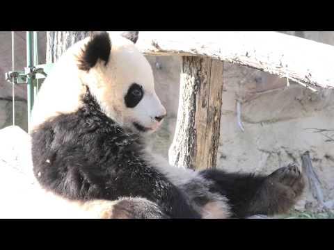 Yuan Meng : Pourquoi si chaud ? ユアンモンなんでこんなに暑いの?