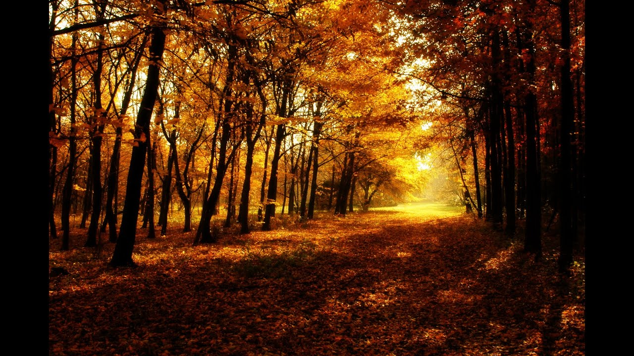Fall Watch Wallpapers Strahlender Herbst Sonnenuntergang Gimp 2 9 Youtube