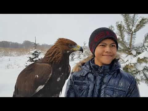 With Kazakh Golden Hunting Eagle