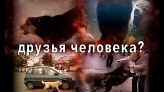 Друзья человека-4.  Записки Херсонского параноика.