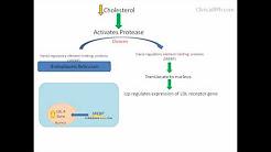 How Drugs Make Sense: HMG-CoA Reductase Inhibitors