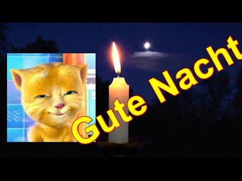 Guten schönen Abend Gute Nacht 🌛 Schlafe träume schön Talking Ginger Katze  Ich liebe Dich