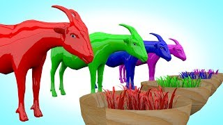 Grass Eating Goat Colors Grass | Goat Change Colors Children Preschool Names of colors