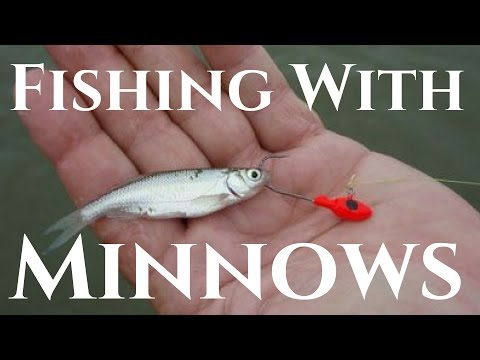 Multi Species Fishing With Live Minnows (Pond Fishing)