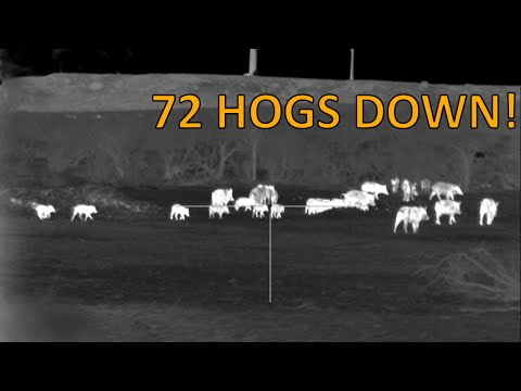 Thermal Hog Hunting | 72 Hogs Down With Pulsar Trail Thermal Scopes