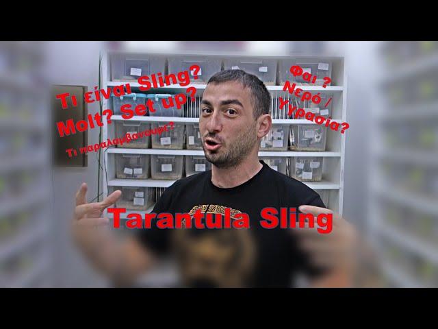 Tarantula slings & New Adds | Feeders Strs ep 34
