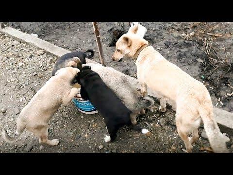 Хозяин не пустил собаку домой и она ушла с щенками в поле Но люди ее не бросили Новосибирск