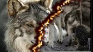 Война волков