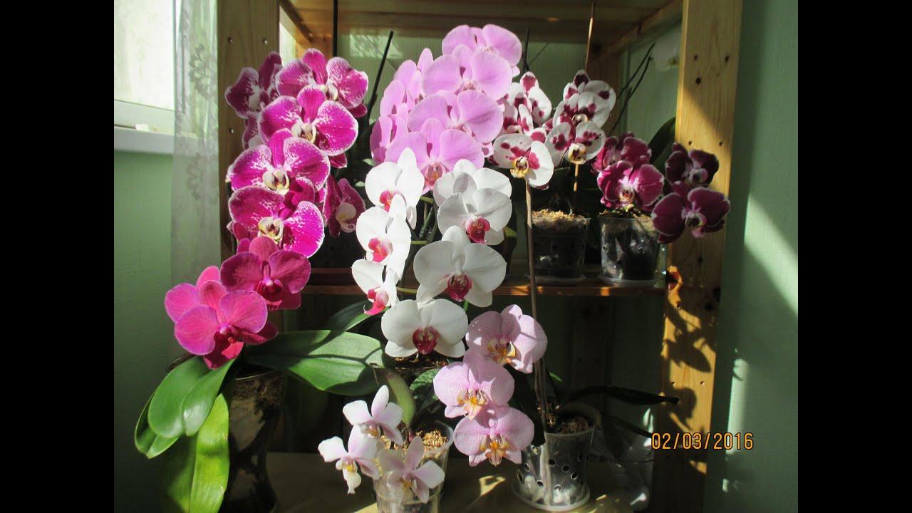 Как пересаживать цветущую орхидею в домашних условиях 509