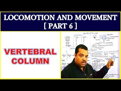 Locomotion and Movement for NEET | Part 6 | Vertebral column