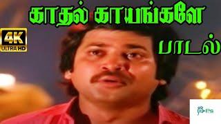 Kadhal Kayangale Neengal  || காதல் காயங்களே || K J Yesudas,Malaysia Vasudevan || Love Sad Song