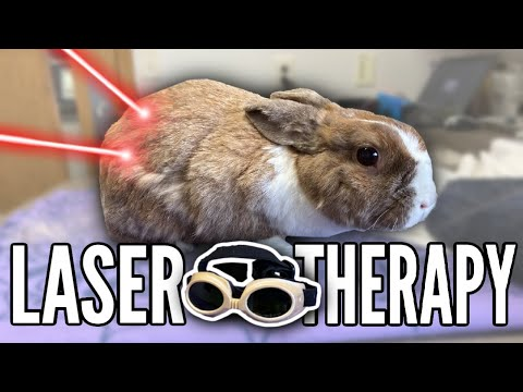 My Rabbit Had Cold Laser Therapy...