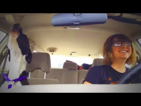 Best of Dogs 🎤🐶 Awesome Dogs Singing (Part 2) [Funny Pets]