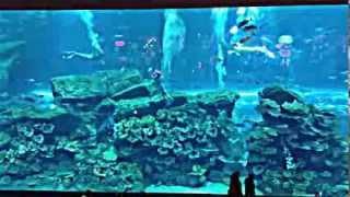 Аквариум в Дубай молле, Trio Mermaid Show 2013 - The Dubai Mall Aquarium(Прекрасное шоу, и не важно что это обычные девушки переодетые в русалок, но как красиво и сказочно!!!, 2013-08-26T16:58:33.000Z)