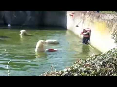 Woman Attacked by Polar Bear after Jumping into Tank at Berlin Zoo 4/11/09