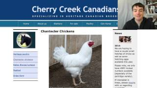 Chantecler - The Only Canadian Breed - Heritage Poultry