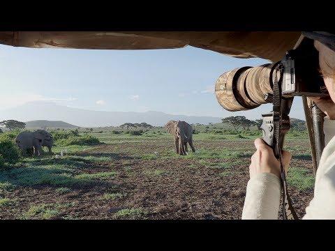 """""""Kilimanjaro Elephants"""" -"""