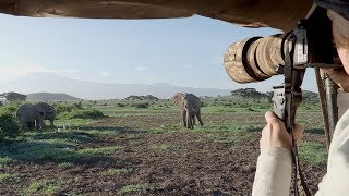 """Kilimanjaro Elephants"" - Amazing Wildlife Safari in Amboseli National Park Kenya 2018 (4K)"