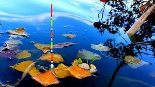 рыбалка В ноябре на поплавок ловля карася