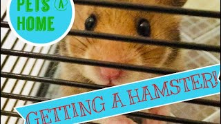 Getting A Hamster Pets At Home Vlog Youtube