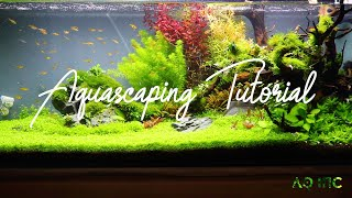 Step by Step Aquascaping Tutorial (200L)