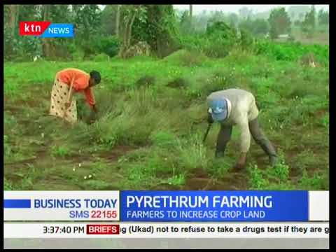 Business Today - 15th March 2018 - Kshs. 70 Billion will be used to help revive pyrethrum farming