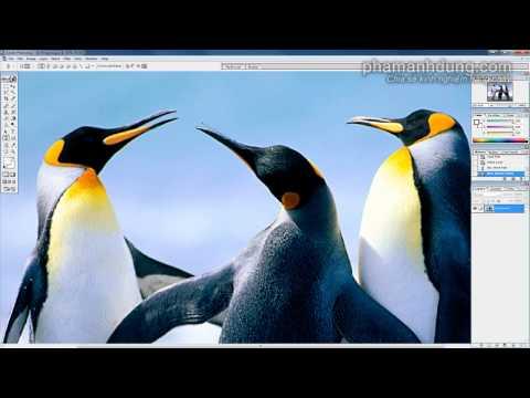 Cách sử dụng công cụ Pen trong Photoshop